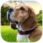 Приложение «Master Dog Training»
