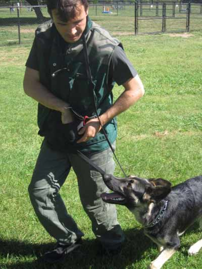 dog training los angeles 77-768x1024
