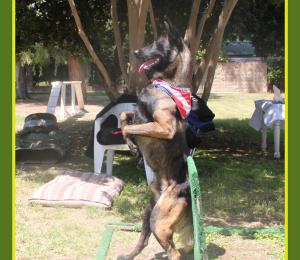 Продажа подготовленных собак