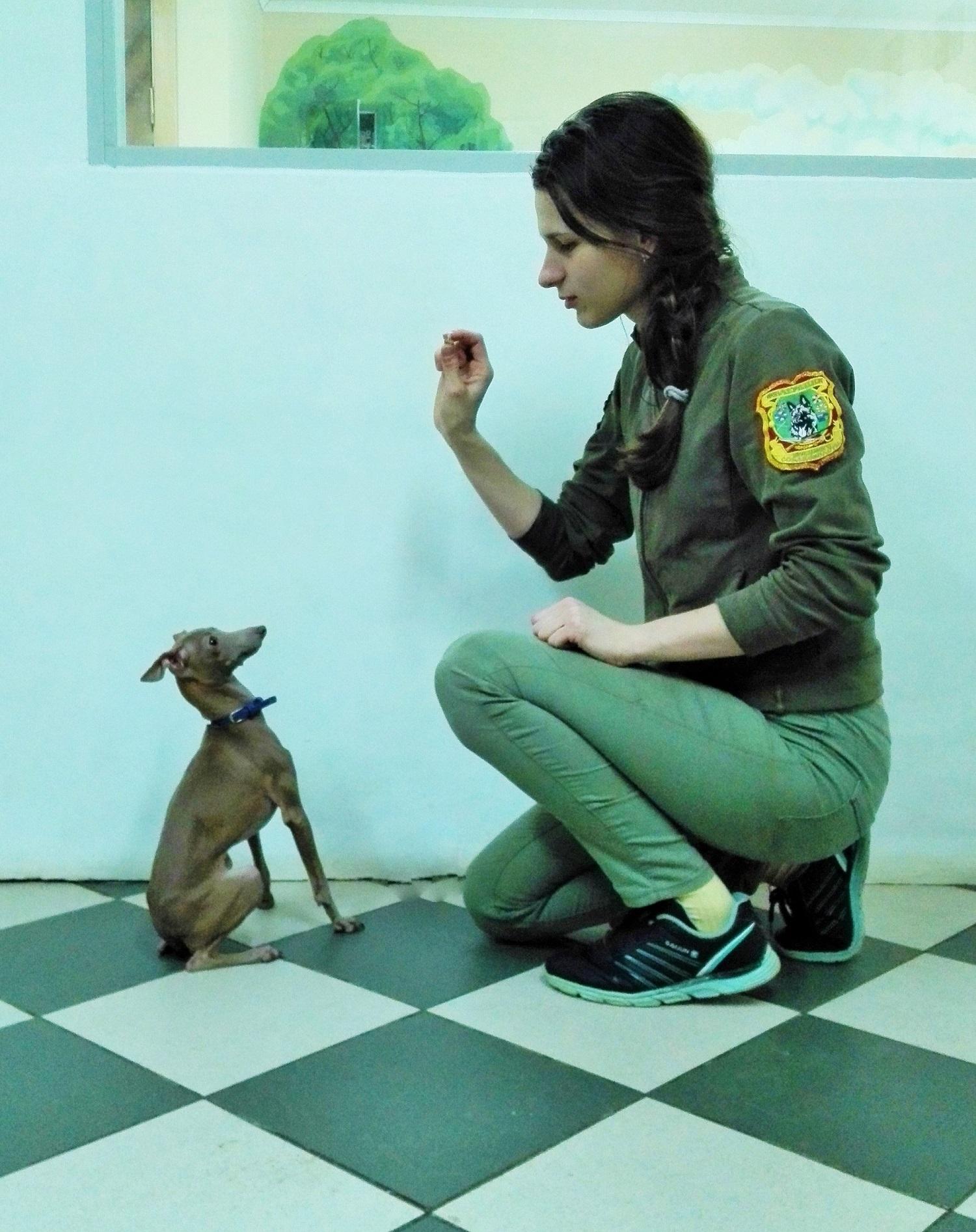 дрессировка декор. собак