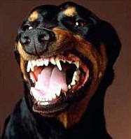 Коррекция поведения собаки для защиты дома