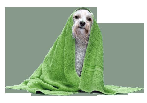 dog-grooming-2